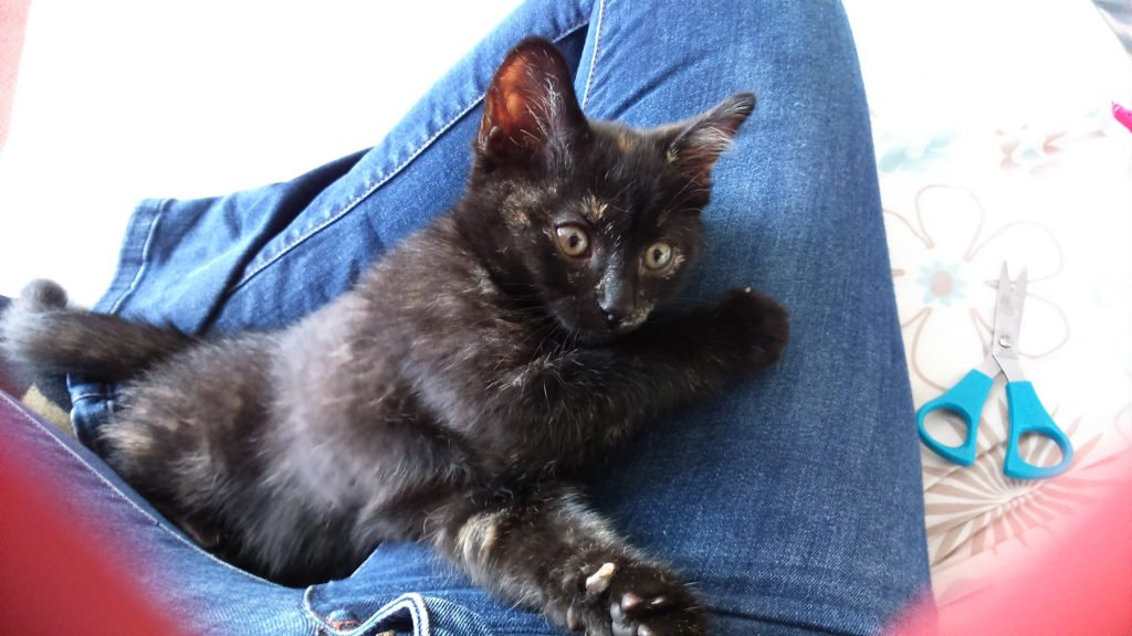 Ember as a kitten curled up on my lap