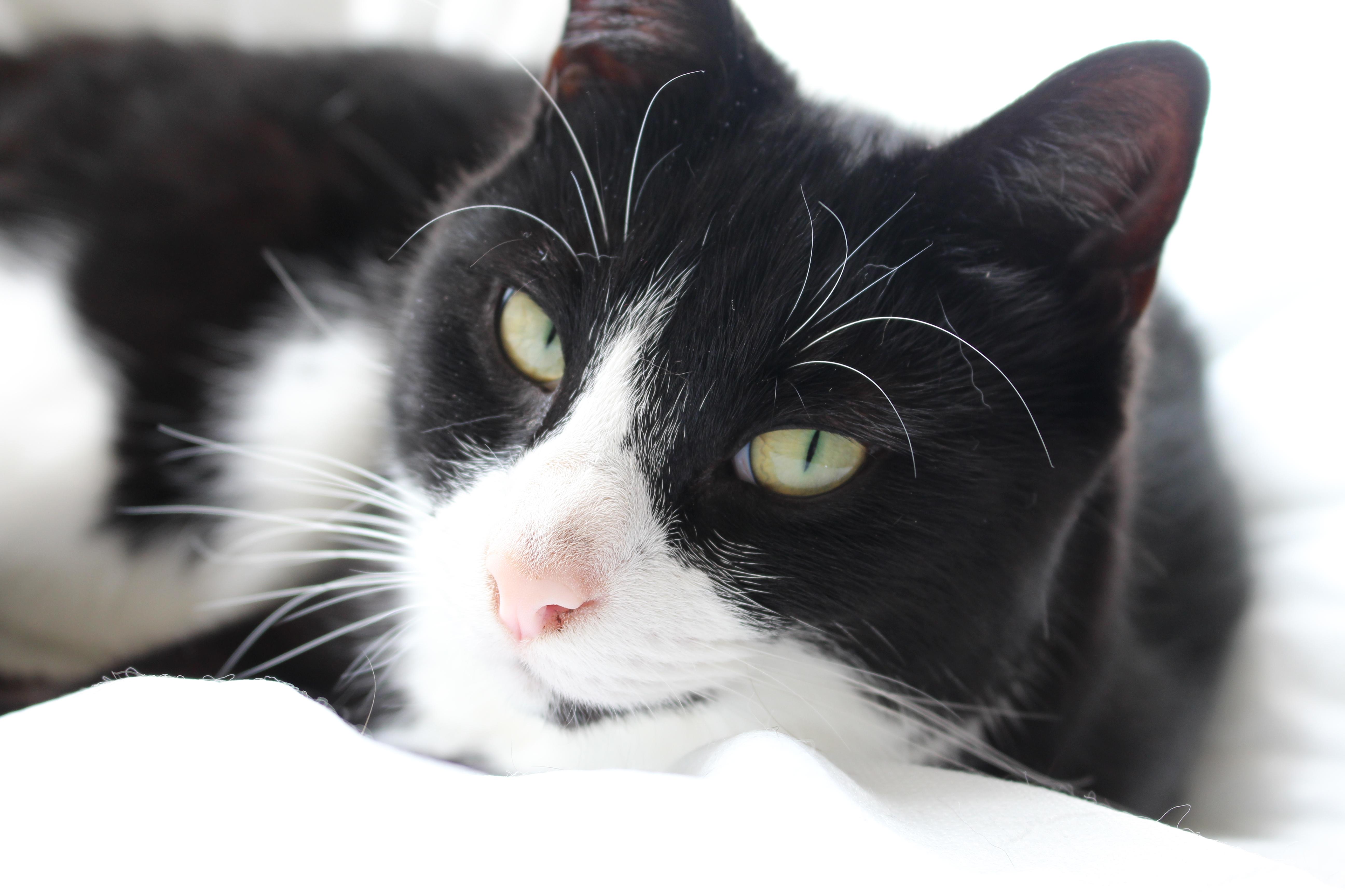 Our cat Bandit