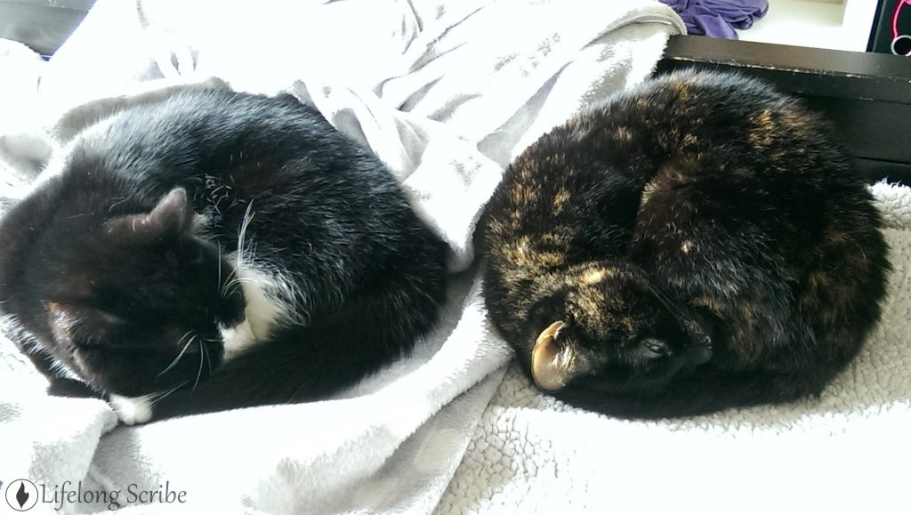 Two sleepy cats curled up, Ember and Bandit